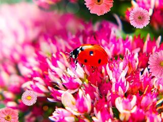 Kontakt z przyrodą - czy jest ważny?
