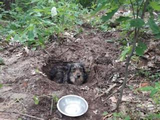 Pies żywcem zakopany w Hucie Komorowskiej.