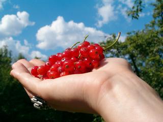 Smaczny owoc - porzeczki.