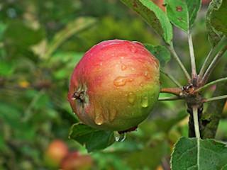 """Figura typu """"jabłko"""""""